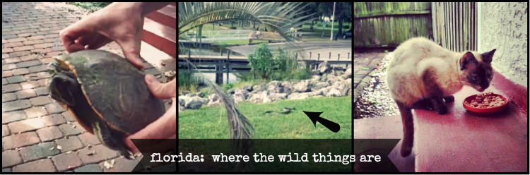 Florida: Where the Wild Things Are | The Thinking Closet