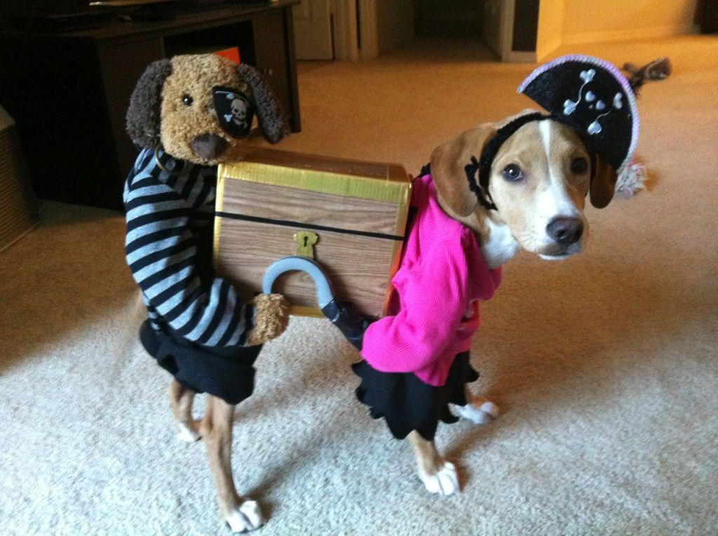 Как сделать  костюм для собаки видео