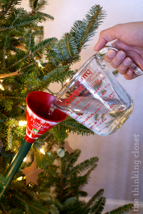You've gotta keep a live tree well watered!  We love our funnel that we got at Home Depot, especially for tree watering.