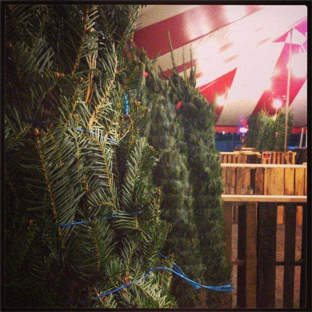 Pick out a tree together! 1 of 101 Creative Date Nights on a Dime! via thinkingcloset.com