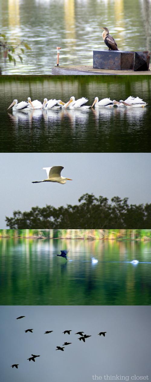 The beauty of Florida birds via thinkingcloset.com