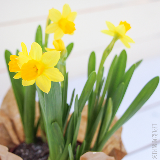 "My ""Dizzy Daffodils"" shot on my brand new DIY Coastal Wood Plank Photo Backdrop. Full tutorial on the blog!"